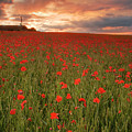 Poppies At Dusk by John Chivers