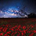 Poppies At Night by Sebastien Coell