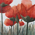 Poppies by Betty-Anne McDonald
