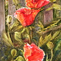 Poppies By The Fence by B Rossitto
