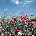Poppies by Cata Deka