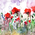 Poppies by Faruk Koksal