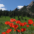 Poppies Flatirons by George Tuffy