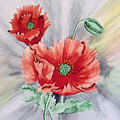 Poppies by Frank Hamilton