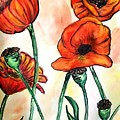 Poppies  by Ginette Kenyon