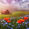 Poppies In A Dream by Debra and Dave Vanderlaan