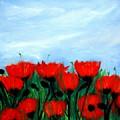 Poppies In A Field by Katy Hawk