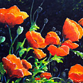 Poppies In The Light by Richard T Pranke