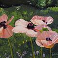 Poppies In The Sun by Lea Novak
