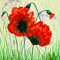 Poppies In The Wild by Ursula Coccomo