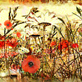 Poppies In Waving Corn by Anne Weirich