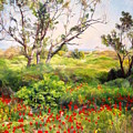 Poppies by Maya Bukhina
