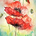 Poppies by Natalja Picugina