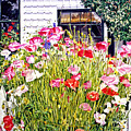 Poppies On Niagara Street by David Lloyd Glover