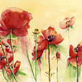 Poppies On Parade by Priscilla Powers