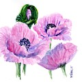 Oriental Poppies by Pam Taylor