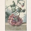 Poppies, Willem Van Leen, 1804 by Willem van Leen