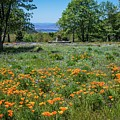 Poppies With A View At Oak Glen by Lynn Bauer