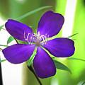 Poppin Purple Flower by Penny Lisowski