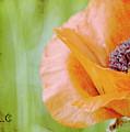 Poppy 9 by Traci Cottingham