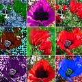 Poppy Collage by Amanda Elizabeth Sullivan