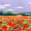 Poppy Field by Anne Marie Brown