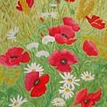 Poppy Field by Dan Anning