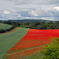 Poppy Field by Keith Armstrong