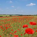 Poppy Fields 1 by Gill Billington