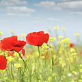 Poppy Flowers Nature Spring Scene by Goce Risteski