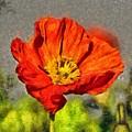 Poppy - Id 16235-142749-5072 by S Lurk