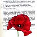 Poppy by Kelly Basinger