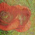 Poppy Love by Traci Cottingham