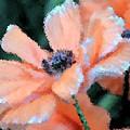 Poppy Primadonna by Angelina Vick