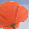 Poppy by Rob De Vries