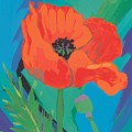 Poppy by Sarah Gillard