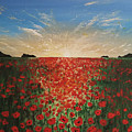 Poppy Sunset by Paul Asaro