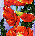Poppy Three by Sherry Shipley