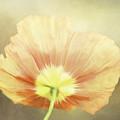 Poppy Whisper by Terry Davis