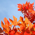 Popular Autumn Art Red Orange Fall Tree Nature Baslee Troutman by Baslee Troutman