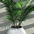 Porch Plant by Richard Rizzo