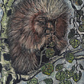 Porcupine In Aspen by Dawn Senior-Trask