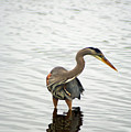 Port Townsend Blue Heron Series by Louise Magno