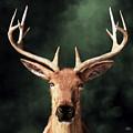 Portrait Of A Buck by Daniel Eskridge