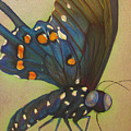 Portrait Of A Butterfly by Andrea Swope