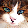 Portrait Of A Cat by Janine Riley