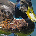 Portrait Of A Duck by Jutta Maria Pusl