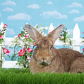 Portrait Of A Gregarious Brown Bunny by Sheila Fitzgerald