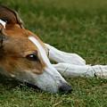 Portrait Of A Greyhound - Soulful by Angela Rath