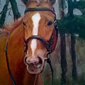 Portrait Of A Horse by Dorothy Siclare